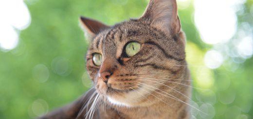 cat-1500498_1280